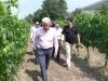 vini-buoni-091