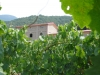 vini-buoni-095