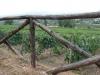 vini-buoni-126