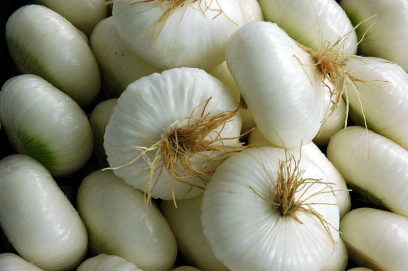 cipolla-bianca-34