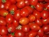 pomodorino-campano