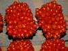 pomodorino-spuniello