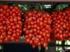 pomodorino-vesuviano